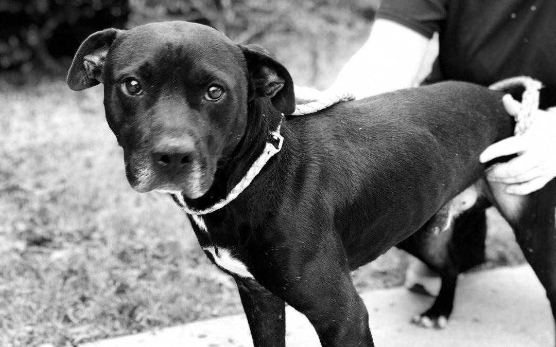 Animal Welfare Macon Bibb County Georgia