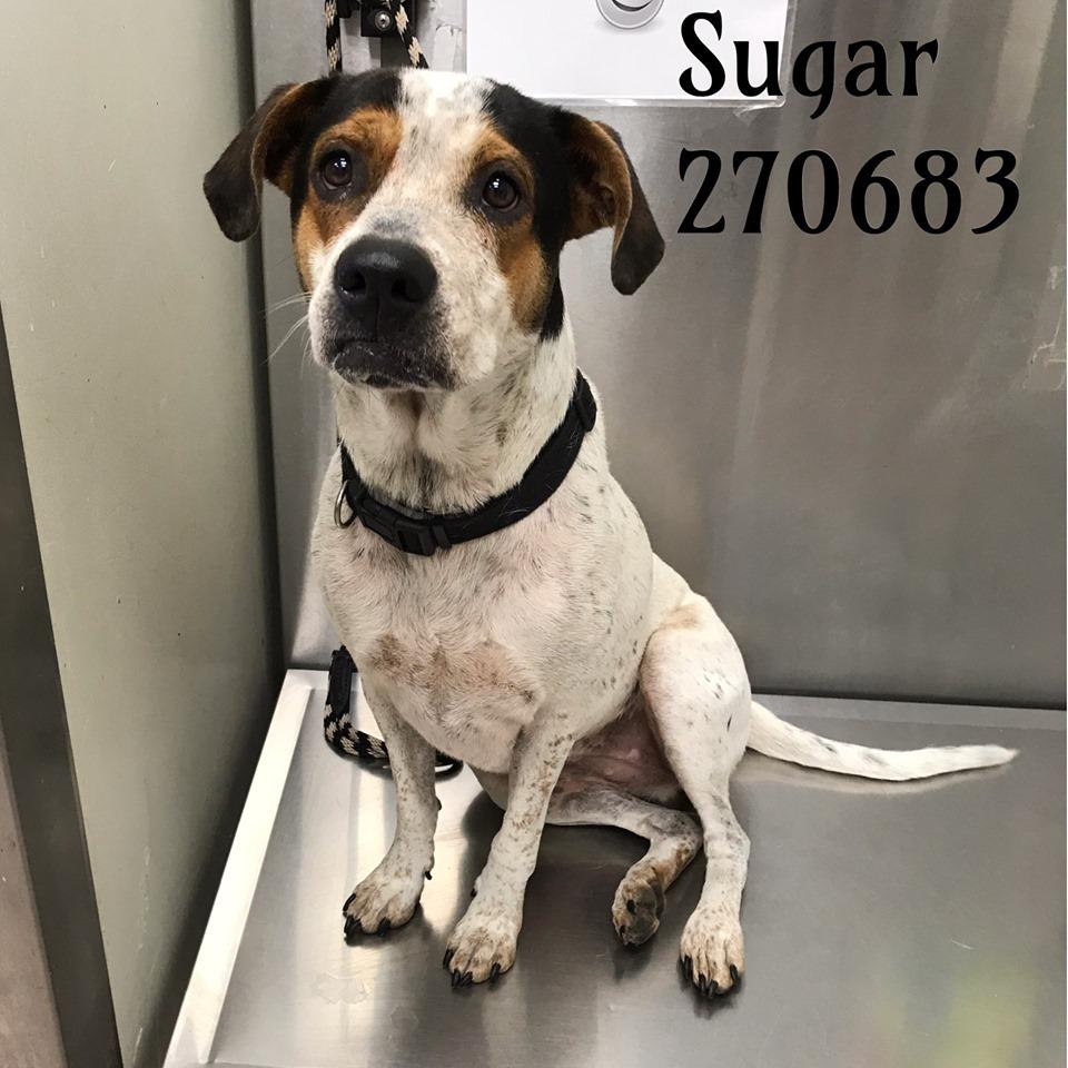 Animal Welfare | Macon-Bibb County, Georgia